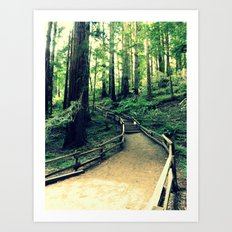 Muir Woods Path Art Print