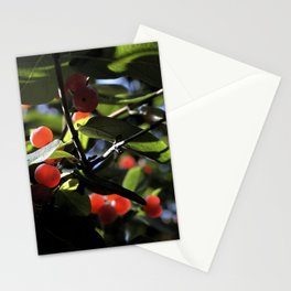 Jane's Garden - Sunkissed Red Berries Stationery Cards