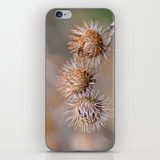 Thorn Pods iPhone Skin