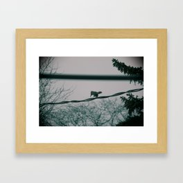 Squirrel on wire Framed Art Print