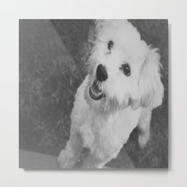 A Puppy Saying Hello Light Black and White Metal Print