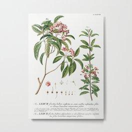 Plantae Selectae No 38 by Georg Dionysius Ehret Metal Print