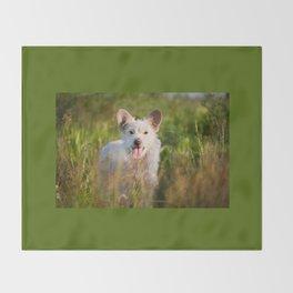Single white stray tyke dog at the meadow Throw Blanket