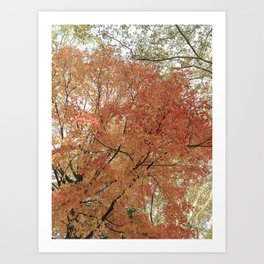 Autumn Leaves III Art Print