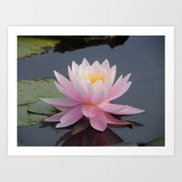 Lilypad Flower Art Print