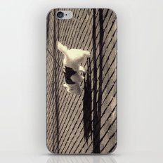 Out for a Walk iPhone & iPod Skin