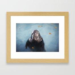 Grey Seal Framed Art Print