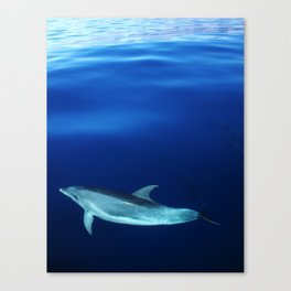 Dolphin and blues Canvas Print