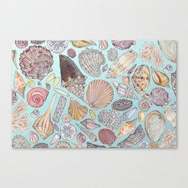 Sanibel Sea Shells Canvas Print