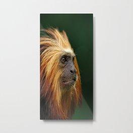 Golden Headed Lion Tamarin Profile Metal Print