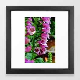 Foxglove Delight Framed Art Print