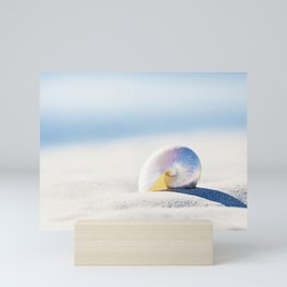 Pearl Nautilus Seashell Photography, Shell on Beach, Blue Coastal Photograph Mini Art Print