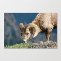 ram Canvas Prints featuring Ram by David Todd