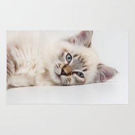 Blue Eyed Kitty Cat Rug