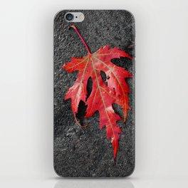 red maple leaf iPhone Skin