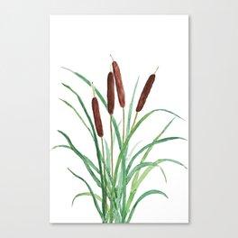 cattails plant Canvas Print