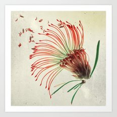 Nodding Pincushion Botanical Blueprints Art Print