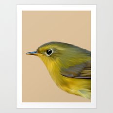 Golden Bush Robin Art Print