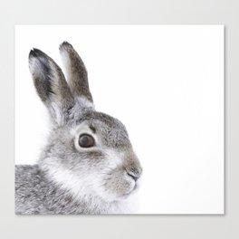 Curious hare Canvas Print
