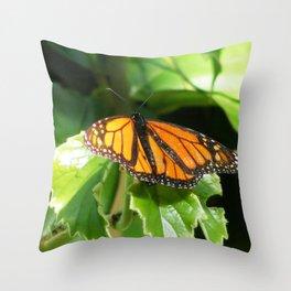 Butterlfy 1 Throw Pillow