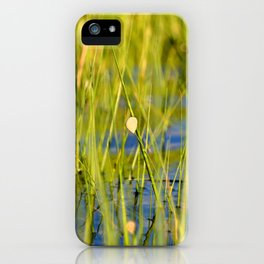 Watercolor Mollusk, Snail 02, Janes Island, Maryland iPhone Case