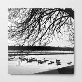 Swans in wintertime in the North of theNetherlands Metal Print
