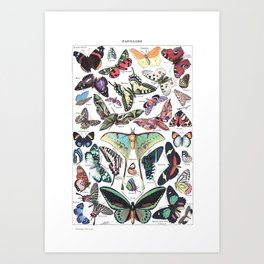 Papillons - Adolphe Millot/Larousse Butterflies Art Print