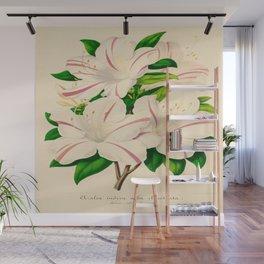 Azalea Alba Magnifica (Rhododendron indica) Vintage Botanical Floral Scientific Illustration Wall Mural