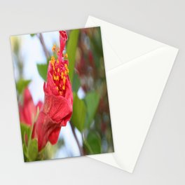 Curled Petals of A Red Hibiscus Bud Stationery Cards