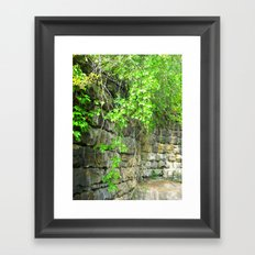 Where The Vines Grow Framed Art Print