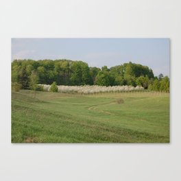 Leelanau County Cherry Farm Canvas Print