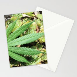 Succulent Sativa Stationery Cards