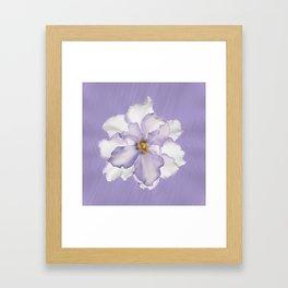 Gorgeous Orchid Framed Art Print