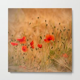 Golden cornfield with poppies Metal Print