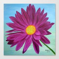 Daisy/close up Canvas Print