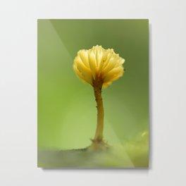Mushroom In The Forest Light... Metal Print