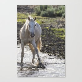 Traveler Making a Splash Canvas Print