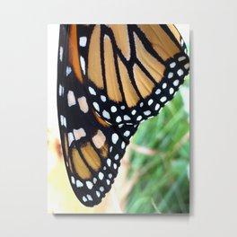 Monarch Butterfly Wings Metal Print