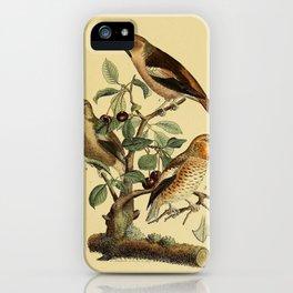 Common Grosbeak iPhone Case