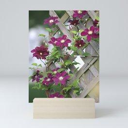 Lilac Clematis Climbing Trellis Mini Art Print