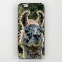 llama iPhone & iPod Skins featuring Llama by LudaNayvelt