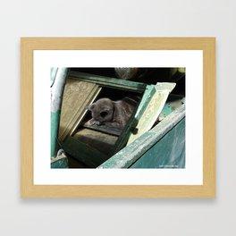 Postapocalypse Kitty Slumbers Framed Art Print
