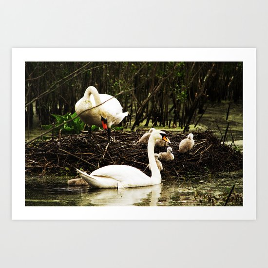 Swans and Cygnets Art Print