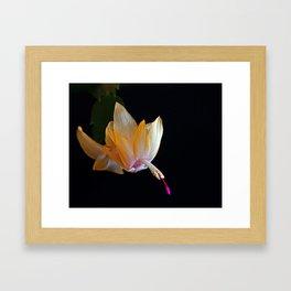 Yellow Christmas Cactus Framed Art Print