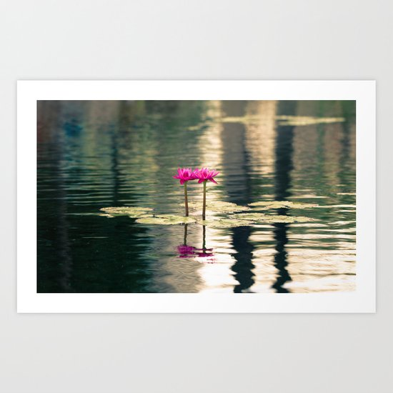 Water Lily 1 Art Print