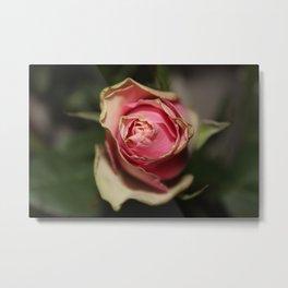 dying rose Metal Print