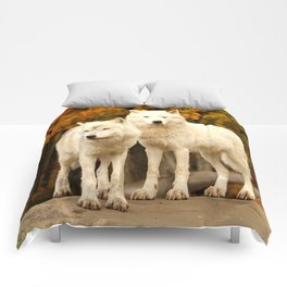 Join us for dinner? Comforters