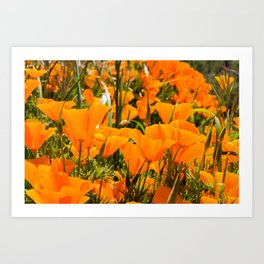 A Field of the California Poppy Art Print