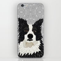 border collie iPhone & iPod Skins featuring Beautiful Border Collie by ArtLovePassion