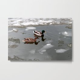 Ducks and a melting pond Metal Print
